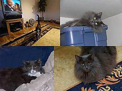10379cats.jpg