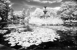 109077Fitzgeralds_Pond.jpg