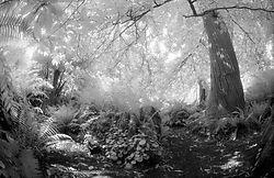 109077Fota_Fern_Gardens.jpg
