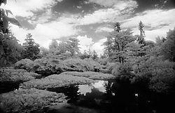 109077Fota_Lake.jpg