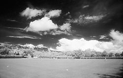 109077Mardyke_Cricket.jpg