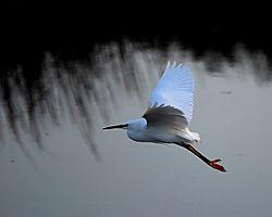 116839small_crane_in_flight_2_pdf.JPG
