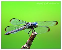 117042Dragon_Fly.jpg