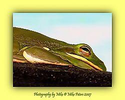 117042Rain_Frog_filtered.jpg