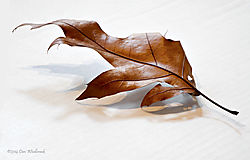 12b-High_Key_Leaf4.jpg