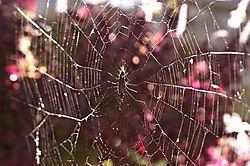 13853Biltmore_Web.jpg