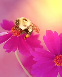 13853Bumble_bee_garden.jpg
