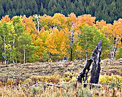 13853Fall_in_the_mountains.jpg