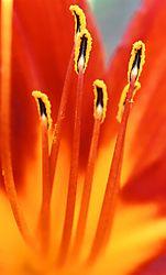 13853Fire_in_the_Garden.jpg
