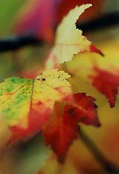 13853Parkway_Fall_Leaves.jpg