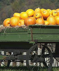 13853Pumpkin_Wagon_2.jpg