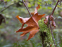 14279autumn_leaf.jpg