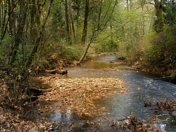 14279goldstream_river.jpg