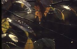 16234leaf_waterdrop_OPT.jpg