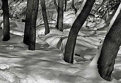 16234trunks_snow_OPT500.jpg