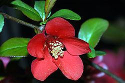 16941redflower.jpg