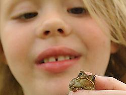 17888sarah_frog_small.jpg