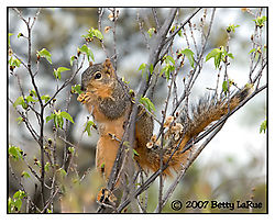 17965BET1127-squirrel-feeding.jpg