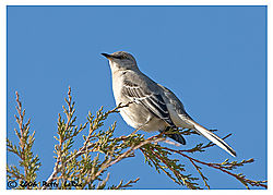 17965BET9853-mockingbird.jpg