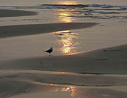 1_bird_cropped_8_5x11.jpg