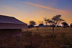 2-_Serengeti_ND51524.JPG
