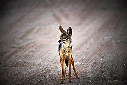 2-_Serengeti_ND52102.JPG