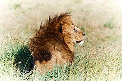 2-_Serengeti_ND52225.jpg