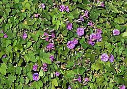 200345036_crop_600.jpg