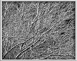 20081212-2186_BnW.jpg