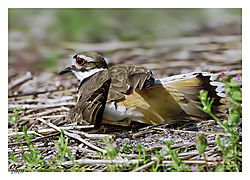 20100408-kIlldeer_FRM0029-2-as-Smart-Object-1.jpg