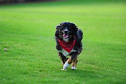 2012_Toffel_Dogs_117.JPG
