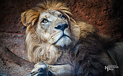 20130726_Zoo_Atlanta-33-Edit.jpg