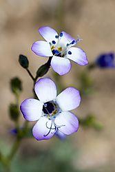 2014-4-6_Desert_Flowers_043.jpg
