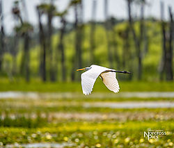 20140407_Orlando_Wetlands_Park-159-Edit.jpg
