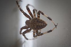 20170818_Spider_00.jpg