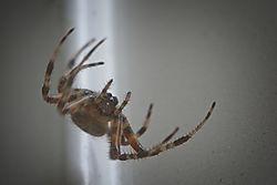 20170818_Spider_01.jpg
