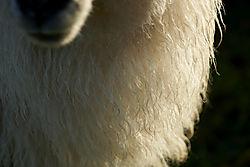 20181204132540_schapen.jpg