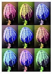 22606Nine-Shades-Of-A-Flower-.jpg