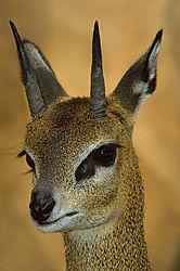 22606desert-deer.jpg