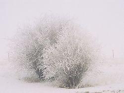 23911FOG_TREE.jpg