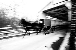 4029Amish-buggy.jpg