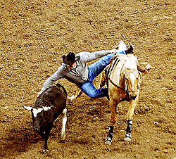 4029Cowboy-Steer.jpg