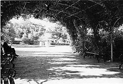4029Lady_at_Botanical_Garden_copy.jpg