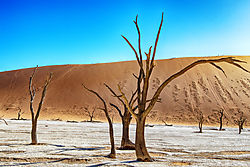 5001178_Deadvlei_nik_balanced_filter.jpg
