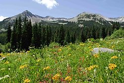 59564Mountain_flowers.jpg