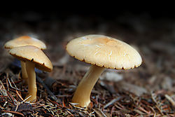596042004-03-14-13h35m05_mushrooms.jpg