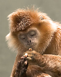68544Bronx-Zoo-Monkey.jpg