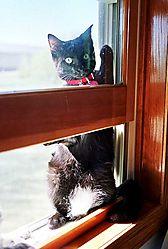 7024rollie_window_web.jpg