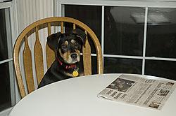 73376060222_014_Abby_the_Dog.jpg