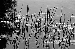 75853Pods_Grass_200mm_f16_spot_53_B_W_jpeg.jpg